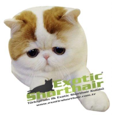 scottcat